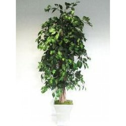 Supporting image for Natural Stemmed Green Ficus Liana