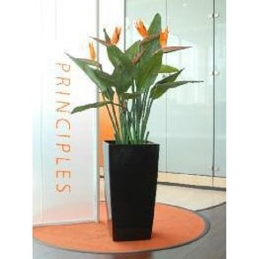 Supporting image for Bird of Paradise