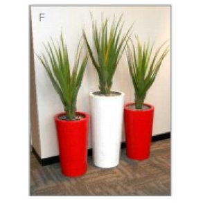 Supporting image for Office Plants